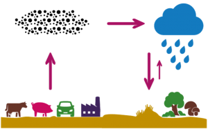 stikstofkringloop
